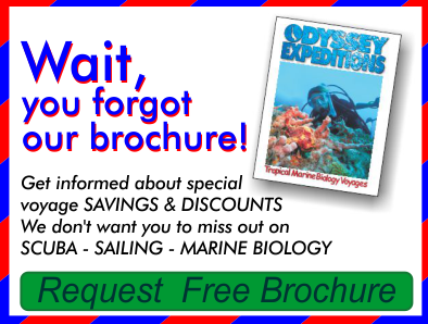 Wait, you have not requested our free brochure, we dont want you to miss out on Sailing - SCUBA - and Marine Biology, click to have our 30 page brochure mailed to you